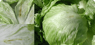 lettuce with stain